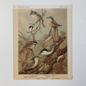 Vintage • Bird Print Wall Art